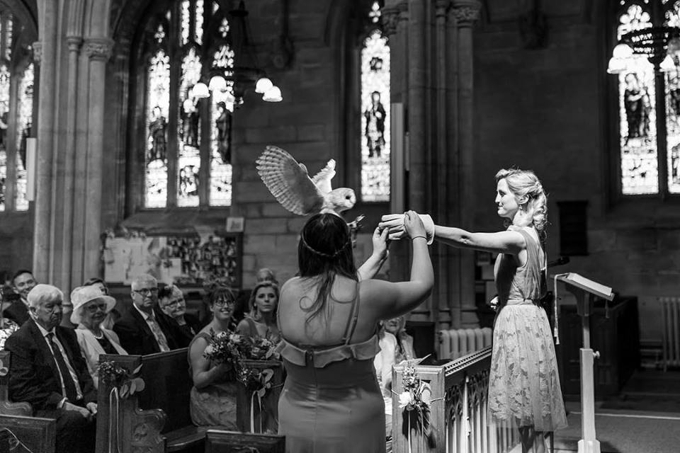 Our Owl Ring Bearer in flight delivering the rings in a Church in Bristol.